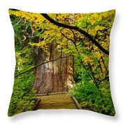 An Old Growth Douglass Fur In The Grove Of The Patriarches Mt Rainer National Park Throw Pillow by Jeff Swan