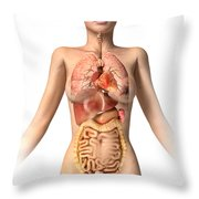 Anatomy Of Female Body With Internal Throw Pillow by Leonello Calvetti