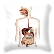 Anatomy Of Human Digestive System Throw Pillow by Stocktrek Images
