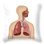 Anatomy Of Human Respiratory System Throw Pillow by Stocktrek Images