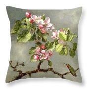 Apple Blossoms And A Hummingbird Throw Pillow by Martin Johnson Heade