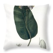 Asclepias Syriaca From Phytographie Throw Pillow by L.F.J. Hoquart