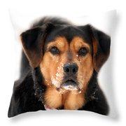 Attentive Labrador Dog Throw Pillow by Christina Rollo