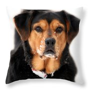 Attentive Labrador Dog Throw Pillow by Christina Rollo