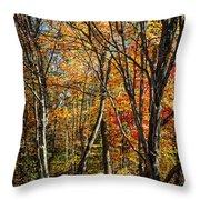 Autumn Trees Throw Pillow by Elena Elisseeva