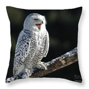 Awakened- Snowy Owl Laughing Throw Pillow by Inspired Nature Photography By Shelley Myke