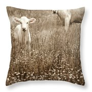 Babe Of Mine Throw Pillow by Steven  Michael