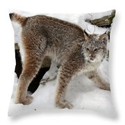 Baby Canadian Lynx Leaving The Winter Den Throw Pillow by Inspired Nature Photography Fine Art Photography