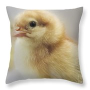 Baby Chicken Throw Pillow by Darleen Stry