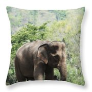 Baby Elephant Chiang Mai, Thailand Throw Pillow by Stuart Corlett