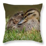 Baby Mallard Throw Pillow by Todd Hostetter