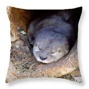 Baby Otter Throw Pillow by Mary Deal
