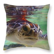 Baby Turtle Throw Pillow by Carey Chen