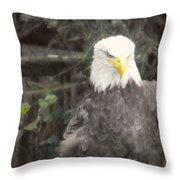 Bald Eagle Throw Pillow by Dawn Gari