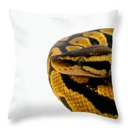 Ball Python Throw Pillow by Ed  Cheremet
