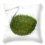 Balloon Plant Throw Pillow by Dave Bowman