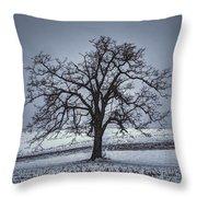 Barren Winter Scene With Tree Throw Pillow by Dan Friend