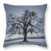 Barren Winter Scene With Tree Throw Pillow by Dan Friend