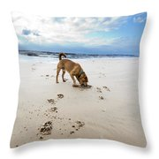 Beach Dog Throw Pillow by Eldad Carin