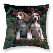 Beagles Throw Pillow by Hans Reinhard