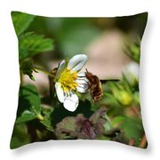 Bee Fly On White Flowers Throw Pillow by Christina Rollo