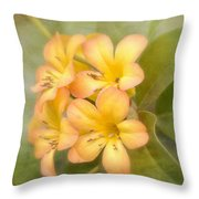 Believe Throw Pillow by Kim Hojnacki