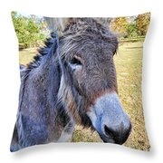 Bet He Gets Good Reception Throw Pillow by Jan Amiss Photography
