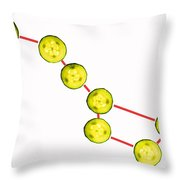 Big Dipper Composed By Cucumber Slices Food Art Throw Pillow by Paul Ge