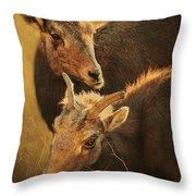 Bighorn Sheep Of The Arkansas River  Throw Pillow by Priscilla Burgers