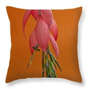 Bilbergia  Windii Blossom Throw Pillow by Heiko Koehrer-Wagner