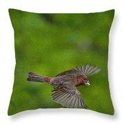 Bird soaring with food in beak Throw Pillow by Dan Friend