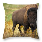 Bison Buffalo Throw Pillow by National Parks Service