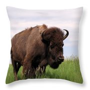 Bison On The Prairie Throw Pillow by Olivier Le Queinec