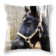 Black Horse Throw Pillow by Susan Leggett