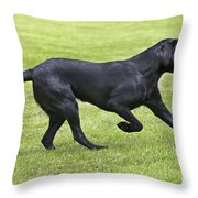 Black Labrador Playing Throw Pillow by Johan De Meester