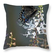 Black Swallowtail Among The Cats Whiskers Throw Pillow by Suzanne Gaff