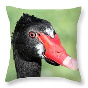 Black Swan Throw Pillow by Shane Bechler