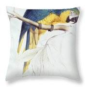 Blue And Yellow Macaw Throw Pillow by Edward Lear