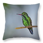 Blue-chinned Sapphire  Throw Pillow by Tony Beck