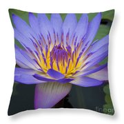 Blue Water Lily - Nymphaea Throw Pillow by Heiko Koehrer-Wagner