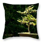Bonsai Throw Pillow by Jane Rix