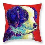 Border Collie Puppy Throw Pillow by Jane Schnetlage