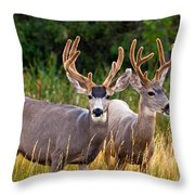 Breakfast With Friends Throw Pillow by Darren  White