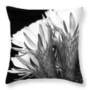 Brilliant Blossoms Diptych Left Throw Pillow by Kelley King
