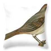 Brown Towhee Throw Pillow by Anonymous