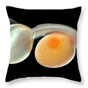 Brown Trout Alevin Hatching Throw Pillow by Ingo Arndt