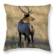 Bull Elk Surveying His Harem Throw Pillow by Bruce Gourley