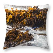 Bull Kelp Durvillaea Antarctica Blades In Surf Throw Pillow by Stephan Pietzko