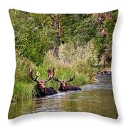 Bull Moose Summertime Spa Throw Pillow by Timothy Flanigan