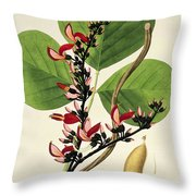 Butea Superba Throw Pillow by William Roxburgh